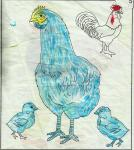 ayam1